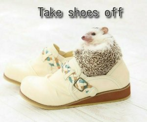 take shoes off porcupine