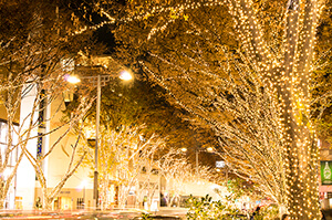 Tokyo, Omotesando, Christmas Illumination
