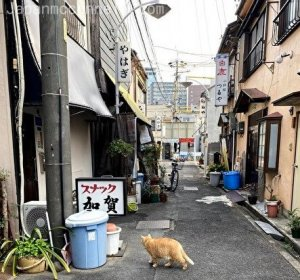 a fatty cute cat, narrow alley, local, nagoya, japan
