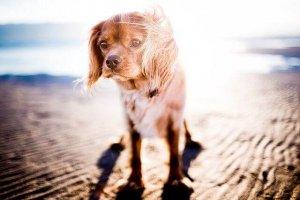 get sun, don't take a nap, dog, beach