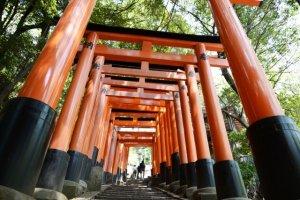 torii gate, senbon torii, shrine, Japan