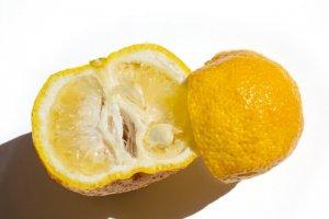 yuzu, Japanese citrus