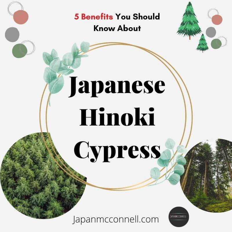 5 things you should know about Japanese Hinoki cypress