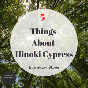 5 things you should know about hinoki cypress