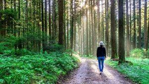 forest bathing, shinrinyoku, nature therapy