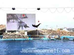 Dolphin performance show, Nagoya Aquarium, Nagoya, Japan