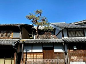 Imai House, Pine tree, Mino, Gifu, Japan
