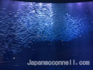 Tornado of  sardines, Nagoya Aquarium, Nagoya Port, Japan