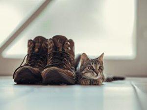 shoes, boots, cat,