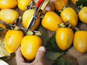 Japanese dried persimmons, homemade hoshigaki
