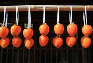 Japanese dried persimmons, hoshigaki, drying persimmons