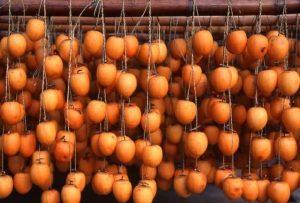 shibugaki, astringent persimmons, types of persimmons, Japan