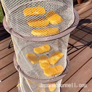 sun drying persimmon slices outside, on the deck, with a drying net