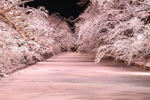 Hirosaki Castle, Hirosaki Park, Winter lights, illuminations, pink lights, night view, Aomori, Japan, Cherry blossoms, snow